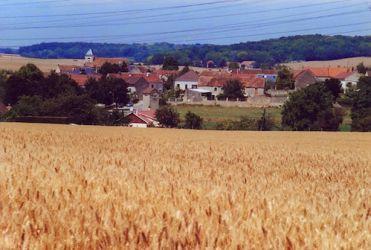 Epou de blé et l'église de Sagy