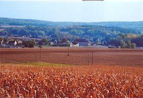 epou de maïs au Petit-Mesnil à Sagy